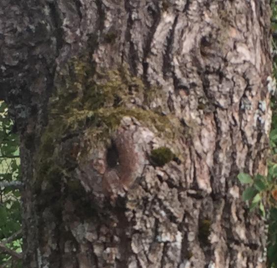 b_gubbträd